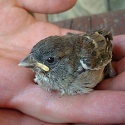 Pájaro nuevo